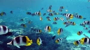 aquatic-133a